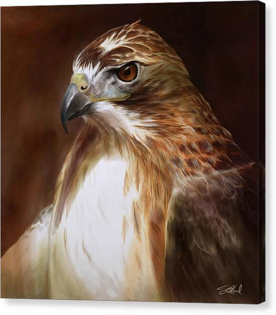 Redtailed Hawk Portrait Canvas Print