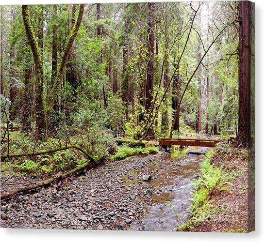 Redwood Creek Flowing Through Muir Woods National Monument - Mill Valley Marin County California Canvas Print