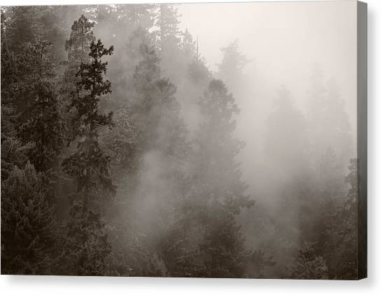 Redwood Forest Canvas Print - Redwood Forest Atmospherics by Steve Gadomski