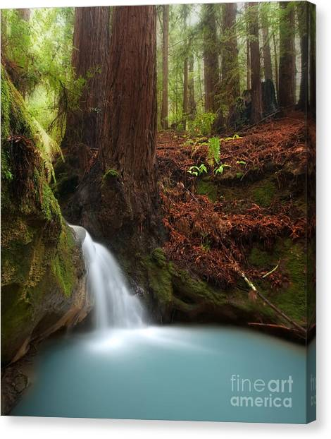 Redwood Forest Canvas Print - Redwood Forest Waterfall by Matt Tilghman