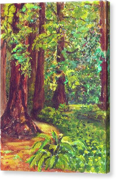 Canopy Canvas Print - Redwood Grove by Karen Coggeshall