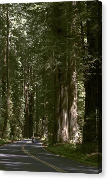 Redwood Highway Canvas Print
