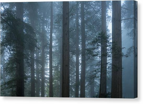 Redwood Forest Canvas Print - Redwood Mist by Steve Gadomski