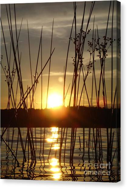 Reeds In A Lake Canvas Print by Chad Natti