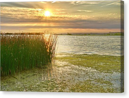 Reeds In The Sunset Canvas Print