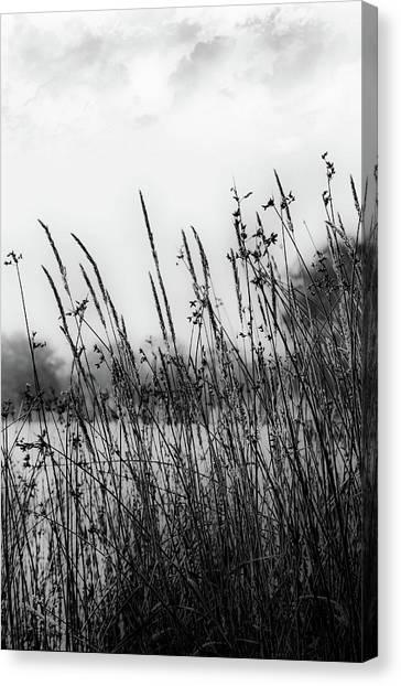 Reeds Of Black Canvas Print