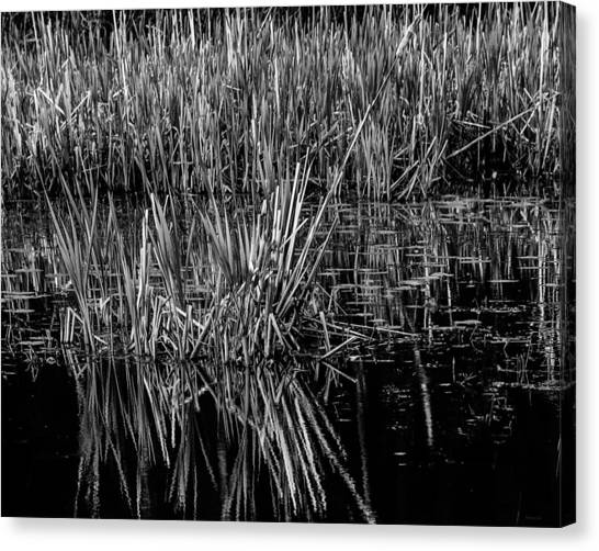 Reeds Reflection  Canvas Print