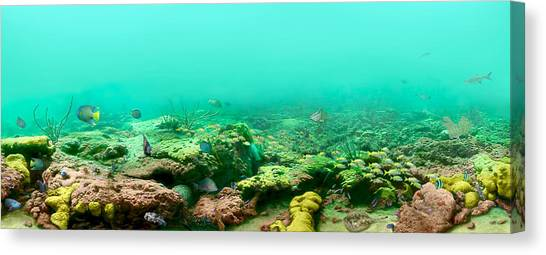 Reef Life Canvas Print by Owen Caddy