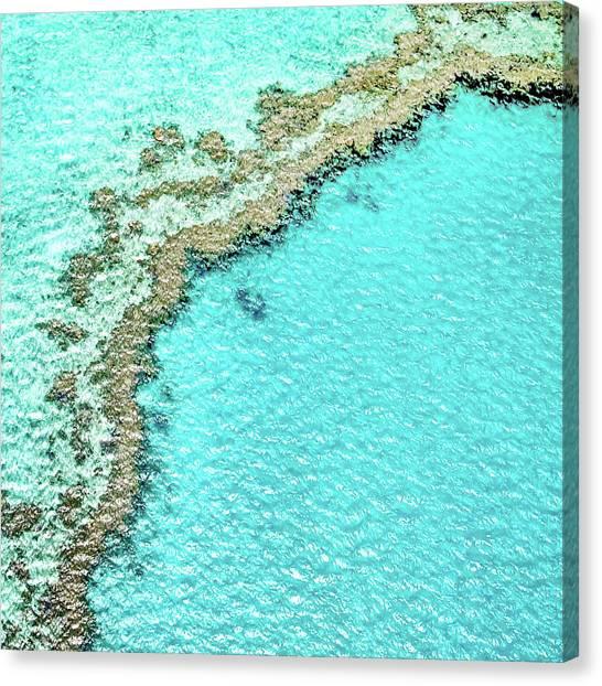 Pic Canvas Print - Reef Textures by Az Jackson