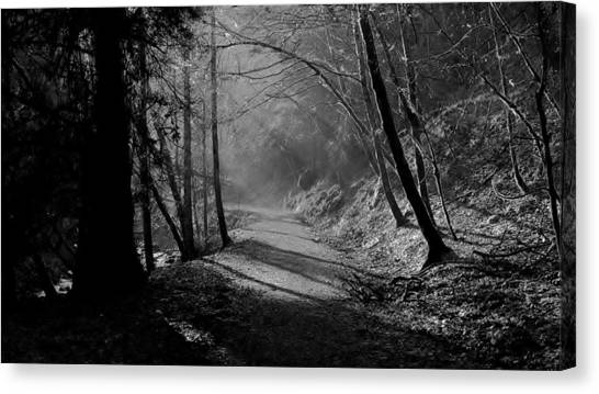 Reelig Forest Walk Canvas Print