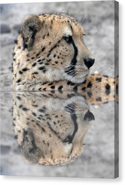 Reflected Cheetah Canvas Print by Teresa Blanton