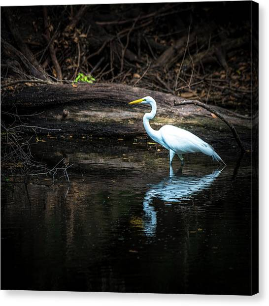 Egrets Canvas Print - Reflecting White by Marvin Spates