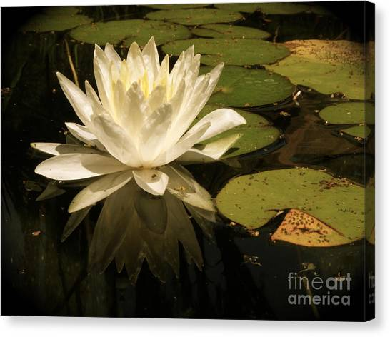Reflection Canvas Print by Amy Strong
