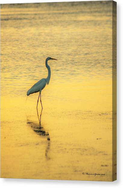 Florida Wildlife Canvas Print - Reflection by Marvin Spates