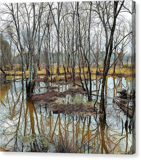 Wetlands Canvas Print - #reflection #nature_shooters by Kazan Durante