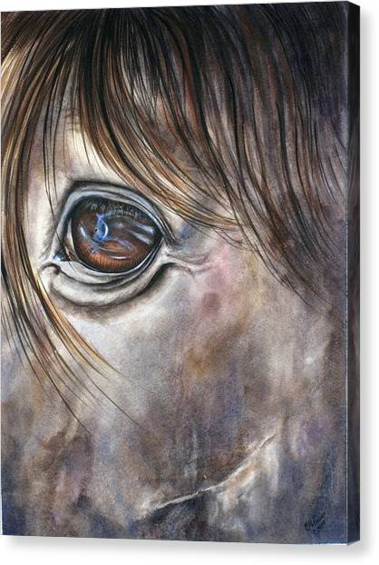 Reflection Of A Painted Pony Canvas Print