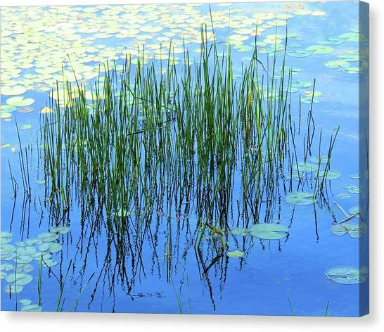 Reflections In The Bay Canvas Print