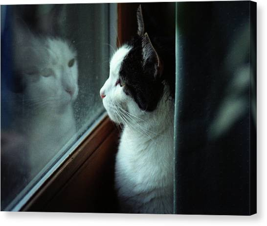 Reflections Of A Cat Canvas Print