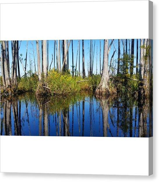 Okefenokee Canvas Print - Reflections On The Okefenokee #trees by Karen Breeze