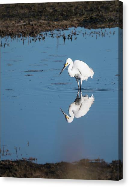 Reflections White Egret Canvas Print