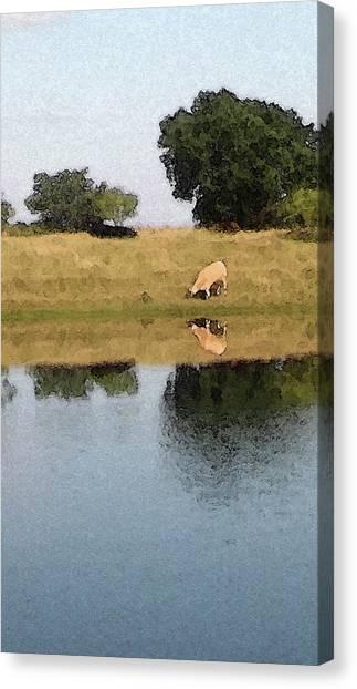 Reflective Cow Canvas Print