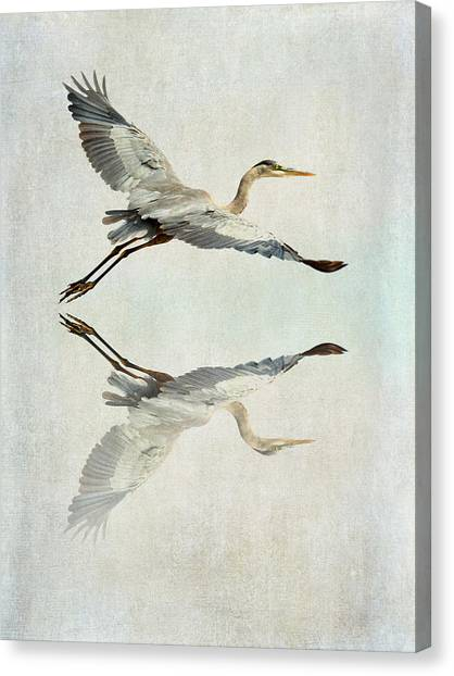 Reflective Flight Canvas Print