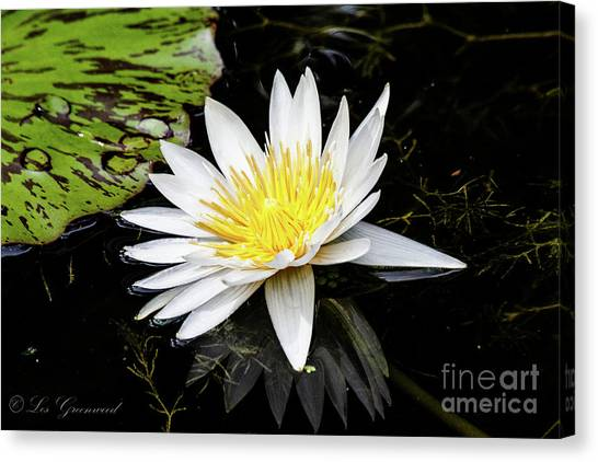 Reflective Lily Canvas Print