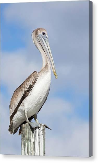 Regal Bird Canvas Print