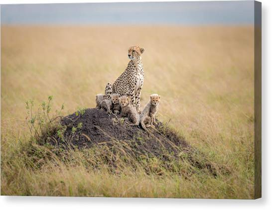 Cheetah Canvas Print - Regal Protector by Ted Taylor