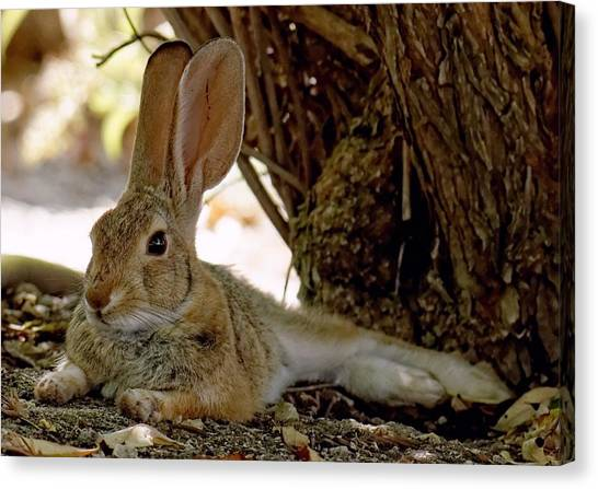 Relaxing Cottontail Canvas Print