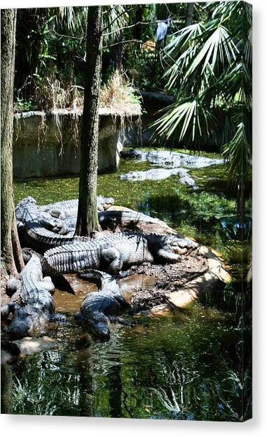 Relaxing In The Swimming Hole Canvas Print