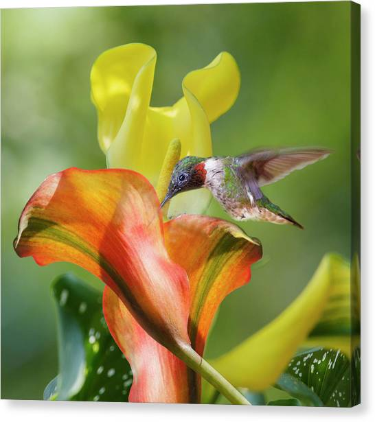 Calla Canvas Print - Remarkable Inspiration  by Betsy Knapp