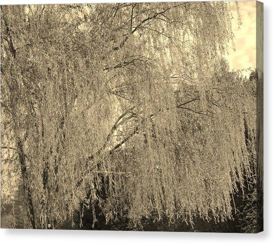 Remember Our Willow Canvas Print
