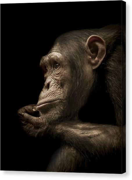 Primates Canvas Print - Reminisce by Paul Neville