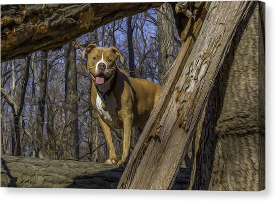 Remy In Tree Oil Paint More Pop Canvas Print