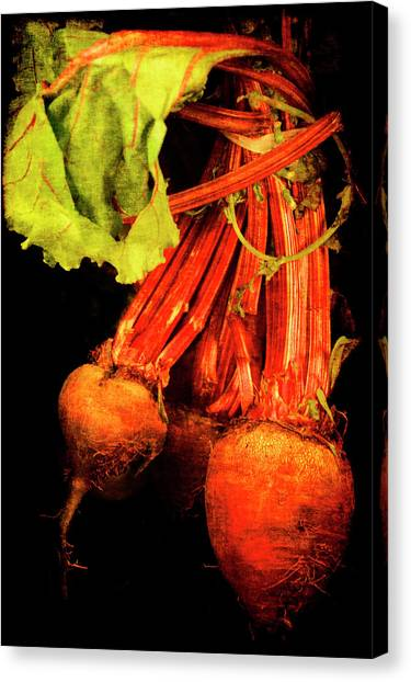 Renaissance Beetroot Canvas Print