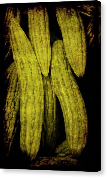 Renaissance Chinese Cucumber Canvas Print