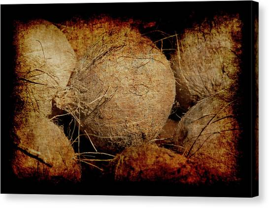 Renaissance Coconut Canvas Print