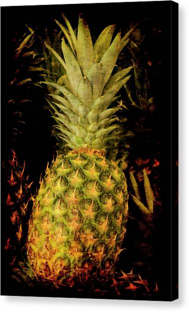 Renaissance Pineapple Canvas Print