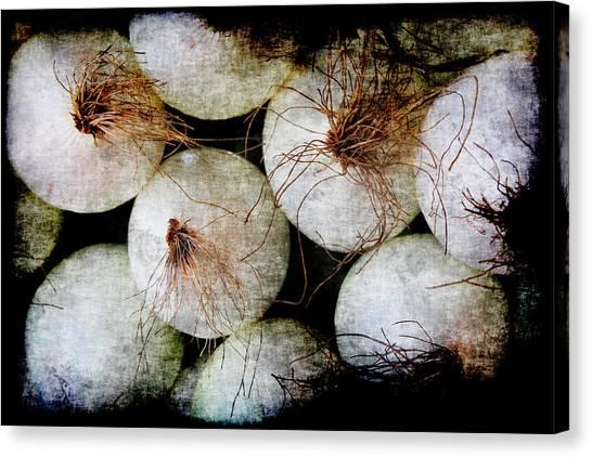 Renaissance White Onions Canvas Print