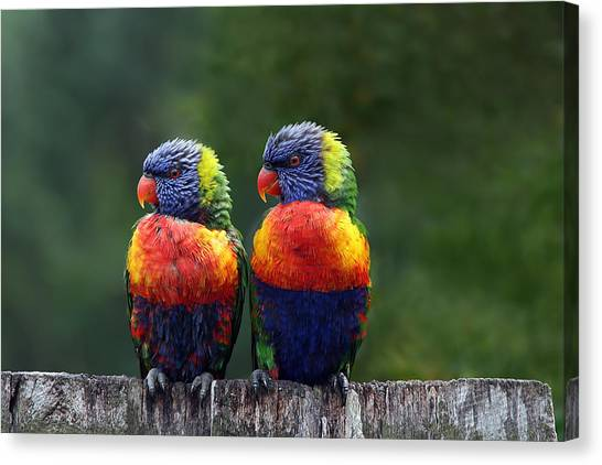 Tropical Birds Canvas Print - Rendezvous In The Rain by Lesley Smitheringale