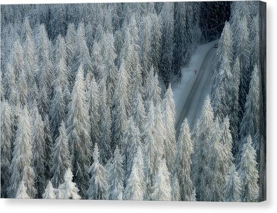 Fir Trees Canvas Print - Rendezvous by Teemu Kalliolahti
