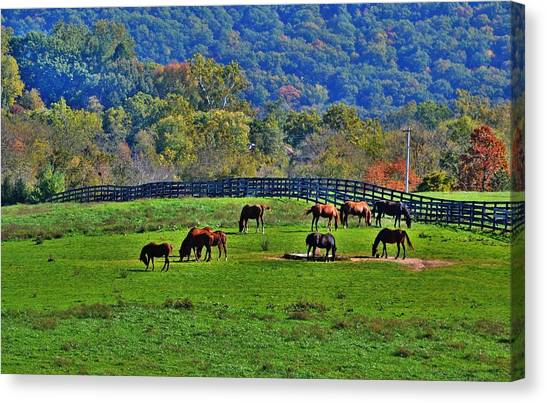 Rescue Horses Canvas Print