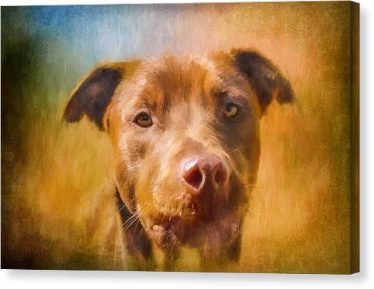 Rescued Chocolate Lab Portrait Canvas Print