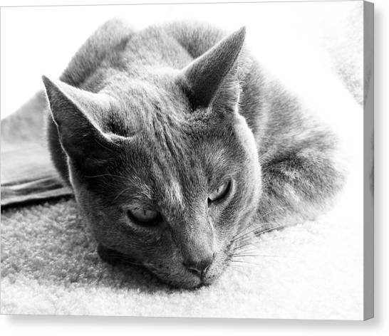 Cat Canvas Print - Resting by Amanda Barcon