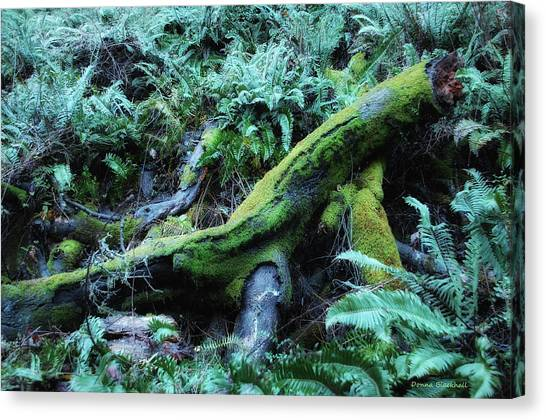 Redwood Forest Canvas Print - Resting Comfortably by Donna Blackhall