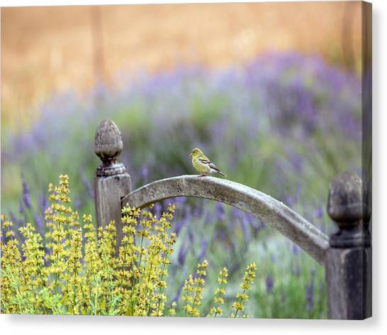 Finches Canvas Print - Resting In The Garden by Rebecca Cozart