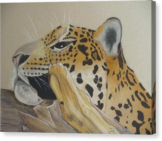 Resting Leopard Canvas Print by Debbie Payne