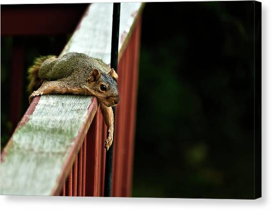 Resting Squirrel Canvas Print