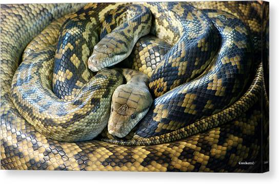 Reticulated Pythons Canvas Print - Reticulated Python by Gary Crockett